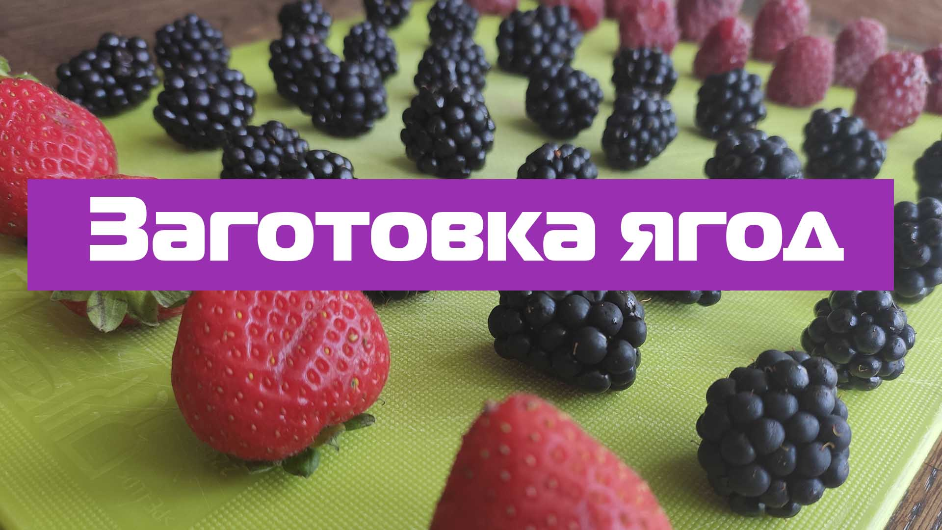 заготовка ягод